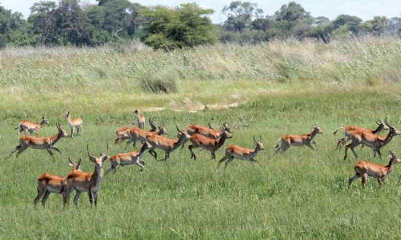 Detido caçador mais temido em Angola