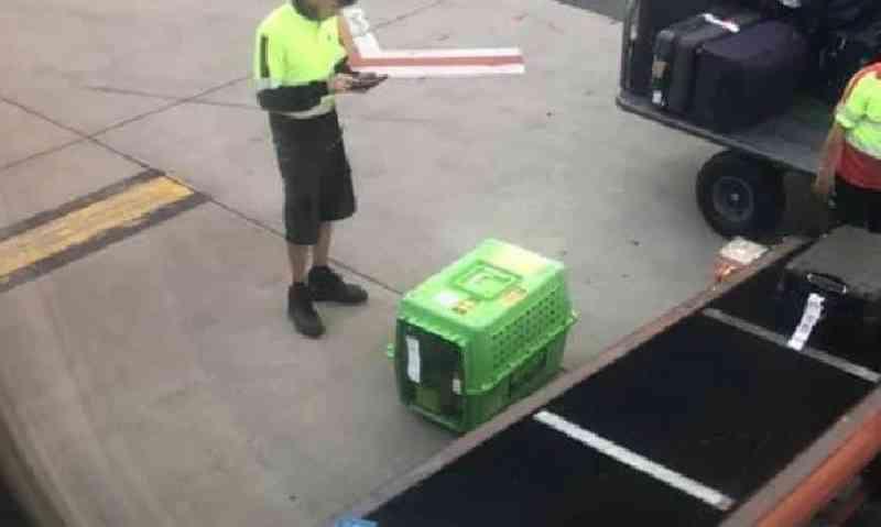 Empresa aérea criticada por deixar cachorro torrando no chão quente do aeroporto