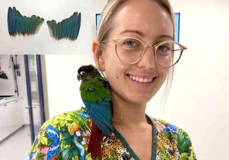 Veterinária faz asas novas para papagaio mutilado voar