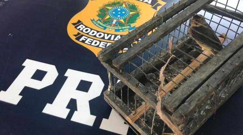 Uma das aves silvestres que foi resgatada pela PRF em rodovia na Bahia — Foto: Divulgação/PRF