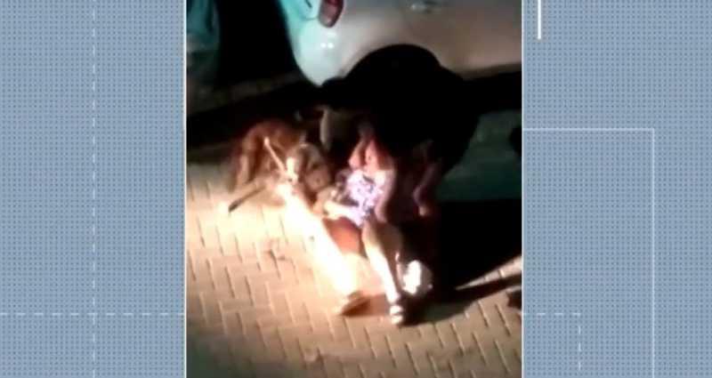 Moradores dizem que cães que atacaram e mataram cachorro em rua de Salvador (BA) são maltratados