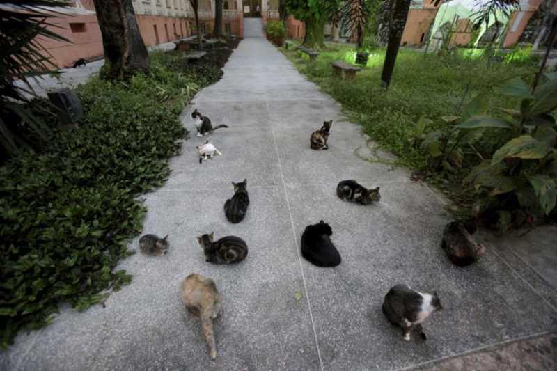 Avanço! Juiz ADMITE 23 gatos como autores de ação na BA