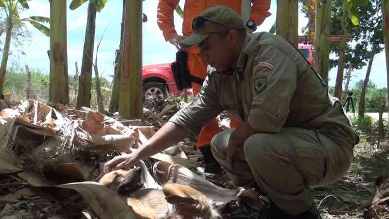 Cadela com patas quebradas é resgatada por Bombeiros em Iguatu, CE