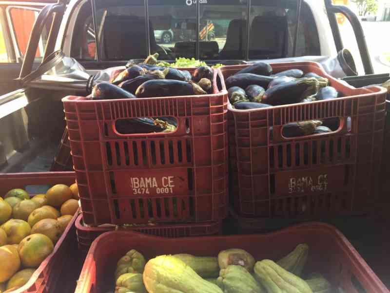 Animais do Ibama são beneficiados com doação de 12 toneladas de alimentos