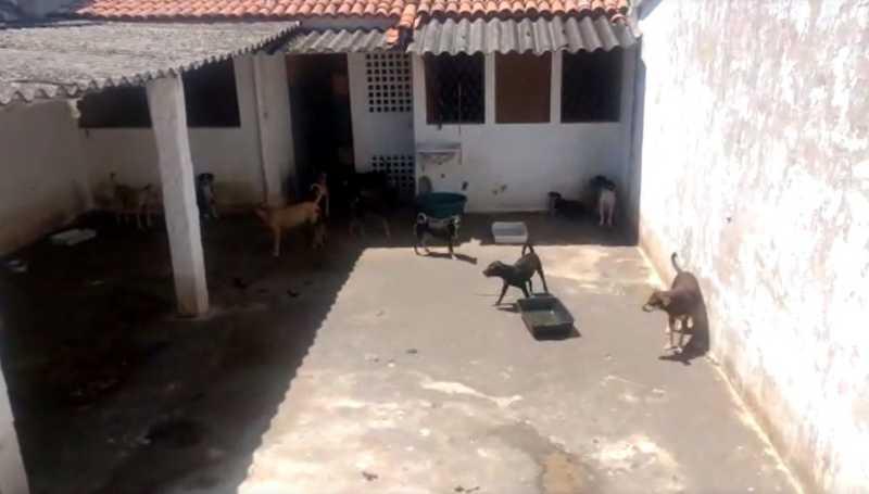 Segundo relatos dos vizinhos, o responsável pelo imóvel, retira os cachorros da rua e os abriga no quintal da casa que está desocupada — Foto: Reprodução