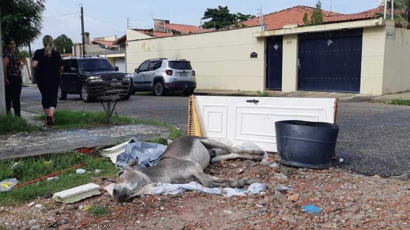 Jumento é atropelado e agoniza durante toda a madrugada no bairro Parque Manibura, em Fortaleza