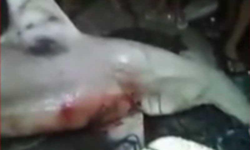 Caso foi registrado em vídeo por moradores do Bairro Serviluz.