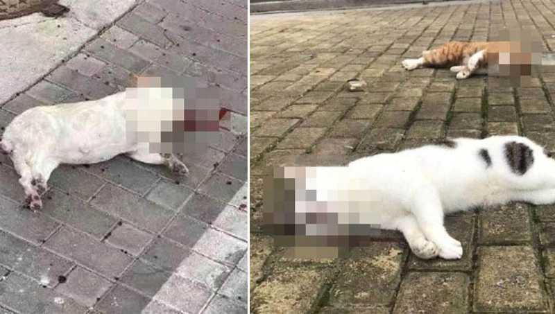 Cães e gatos estão sendo jogados de prédios pelos próprios tutores na China após notícias falsas sobre vírus