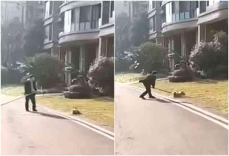 Oficiais espancam cães até a morte na China 'para evitar coronavírus'