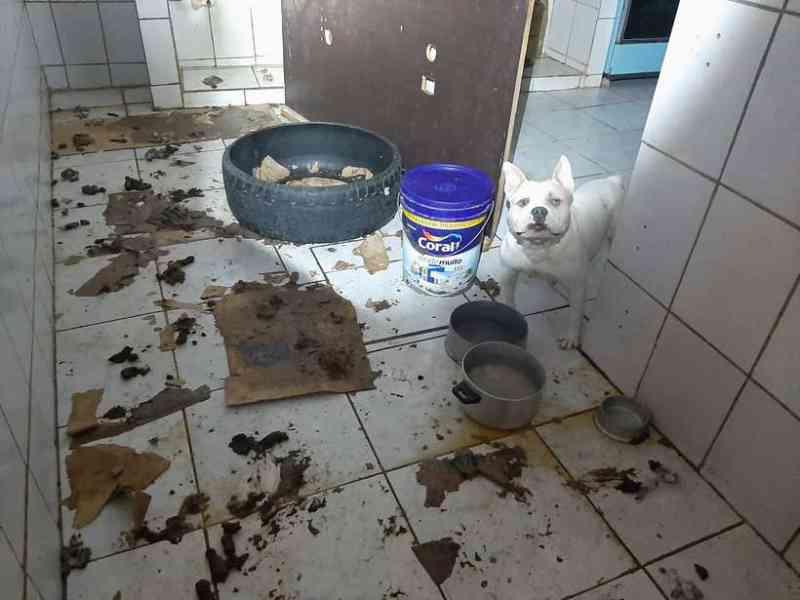 VÍDEO: animais são resgatados de local insalubre em Vicente Pires, DF