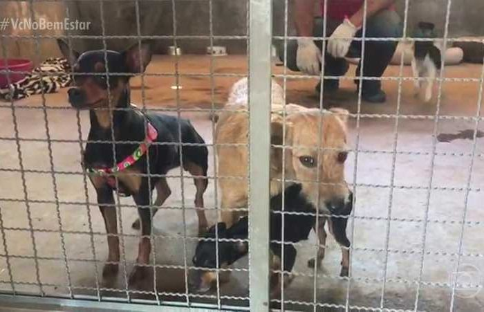 Senado aprova lei que obriga empresas a prestarem assistência a animais