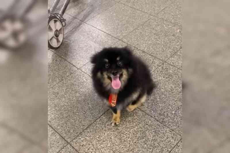 Morador do DF tem cachorro machucado após voo em avião da Gol