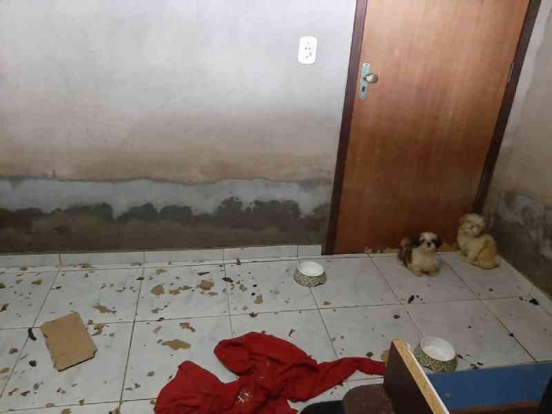 Polícia investiga maus-tratos a cães e gatos em casa de veterinária criadora no DF