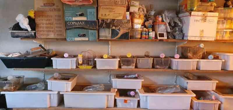 PF realiza operação para combater vendas de animais silvestres pelos Correios
