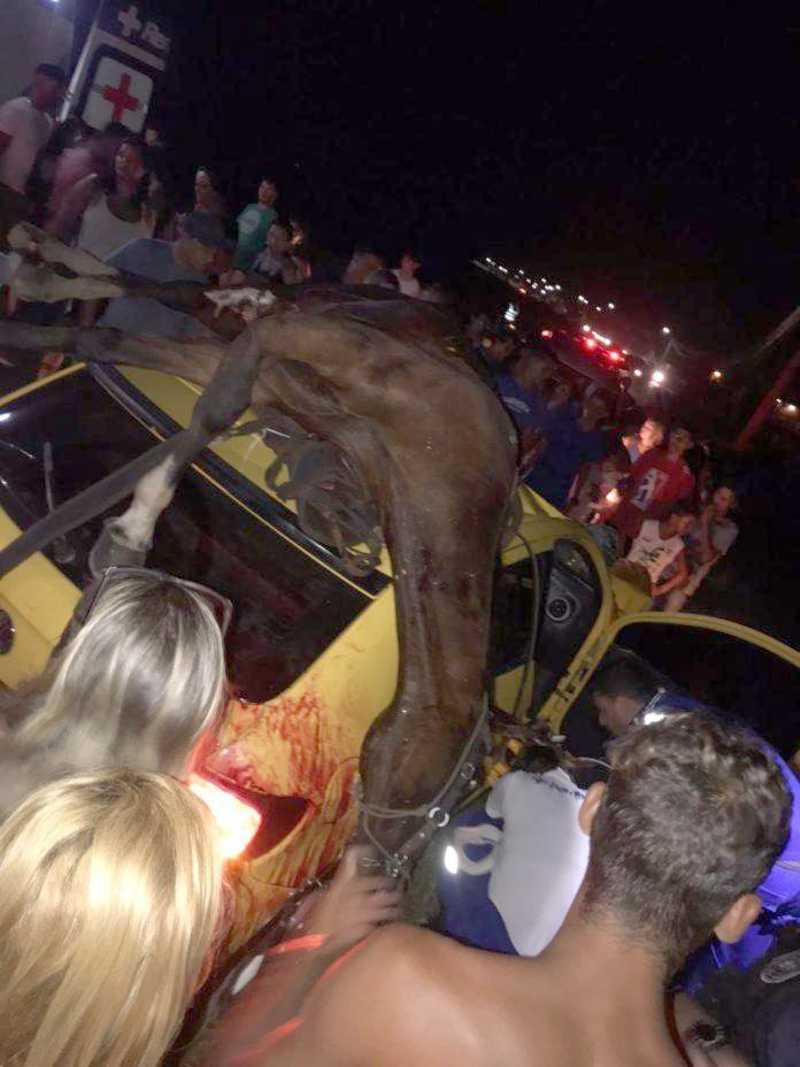 Cavalo vai parar em cima de carro após ser atropelado e morto em Marataízes, ES