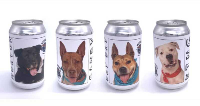 Tutora de cão que fugiu em 2017 reconhece animal colocado para adoção em foto estampada em lata de cerveja