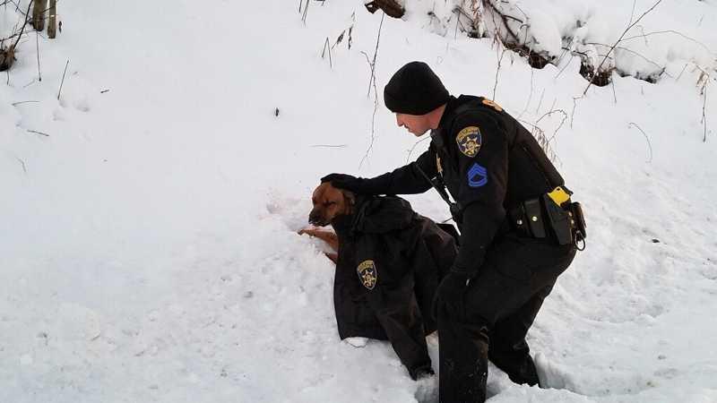 Policial conforta cadela atropelada na beira da estrada
