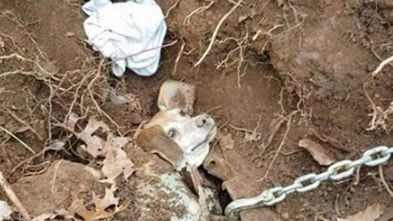 Operação para retirar Henry de carro enterrado Foto: Reprodução/Facebook(Franklin County VA Animal Control and Shelter)