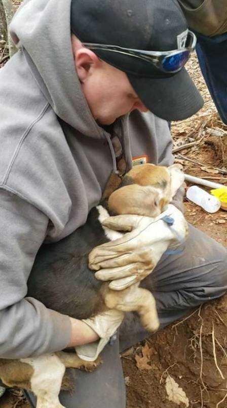 Henry é retirado da terra Foto: Reprodução/Facebook(Franklin County VA Animal Control and Shelter)