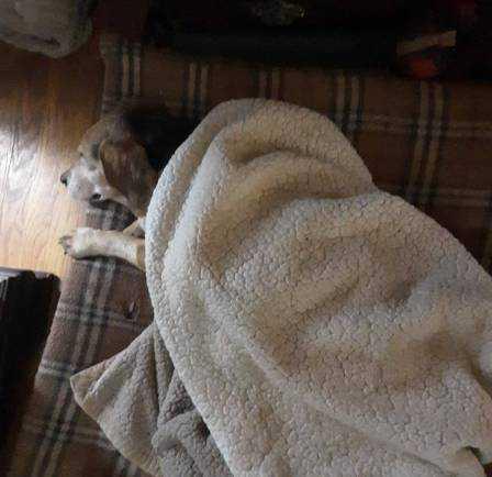 Henry descansa perto de lareira após ser salvo Foto: Reprodução/Facebook(Franklin County VA Animal Control and Shelter)