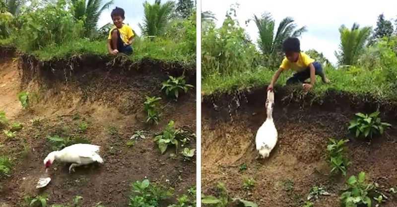 Pato gentil devolve chinelo de menino que havia caído em um barranco