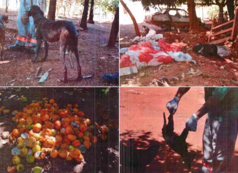 Centro de Zoonoses de Goianésia (GO) é alvo de ação civil pública por maus-tratos