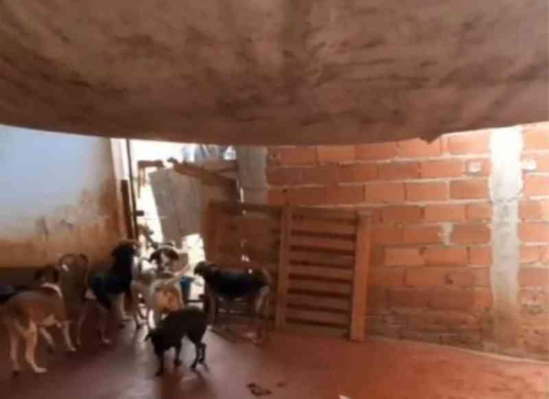 Com mais de 200 animais, abrigo de Goiânia (GO) pede ajuda para não fechar as portas