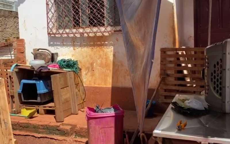 Cães em chácara alugada pelo abrigo, em Goiânia, Goiás — Foto: Mônica Aquino/Arquivo pessoal