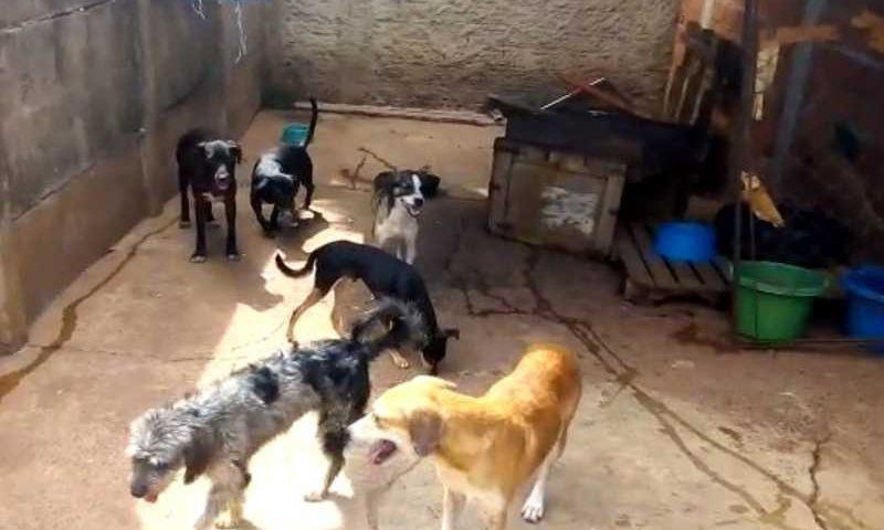 Cães em estrutura improvisada montada em chácara de Goiânia, Goiás — Foto: Mônica Aquino/Arquivo pessoal