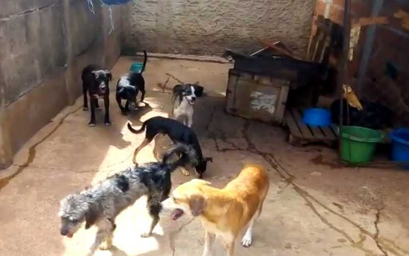 Com dívidas, protetora pede ajuda para não fechar abrigo com quase 300 animais, em Goiânia: 'Vamos acabar na rua'