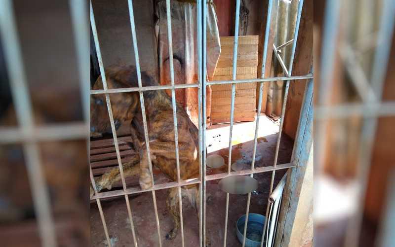 Cães resgatados em estado crítico em Rio Verde, Goiás — Foto: Polícia Civil/Divulgação