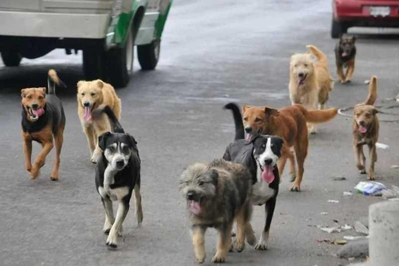 Homem acorda de madrugada para alimentar cães de rua – Foto: EPS
