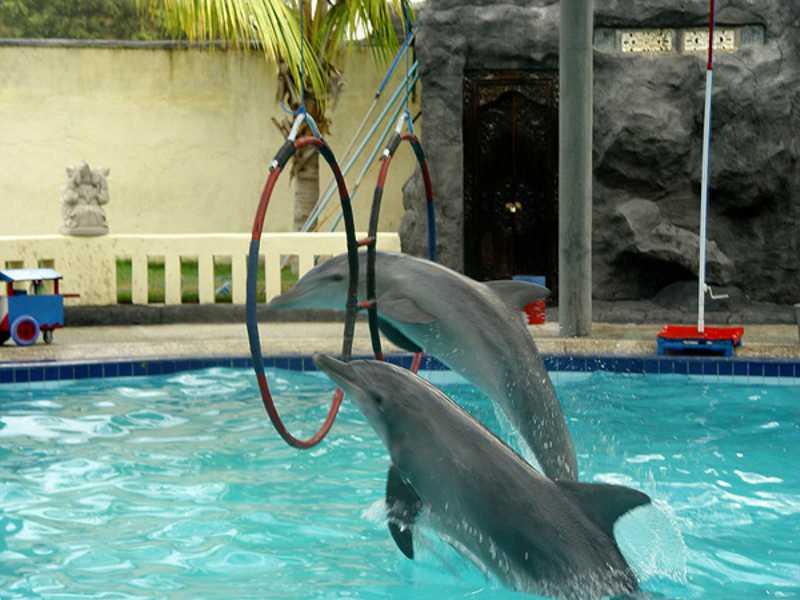 Circos itinerantes de golfinhos estão oficialmente proibidos na Indonésia