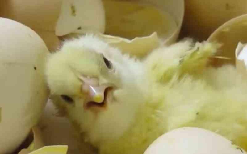 ONG:  Bilhões de animais ainda sofrem após 25 anos da lei do bem-estar ter sido aprovada em Israel