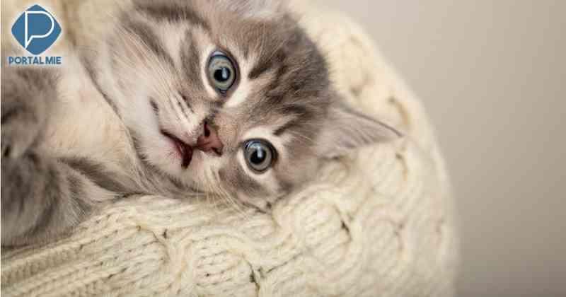 Mulher é presa por abandonar filhote de gato dentro de 'coin locker' em casa comercial