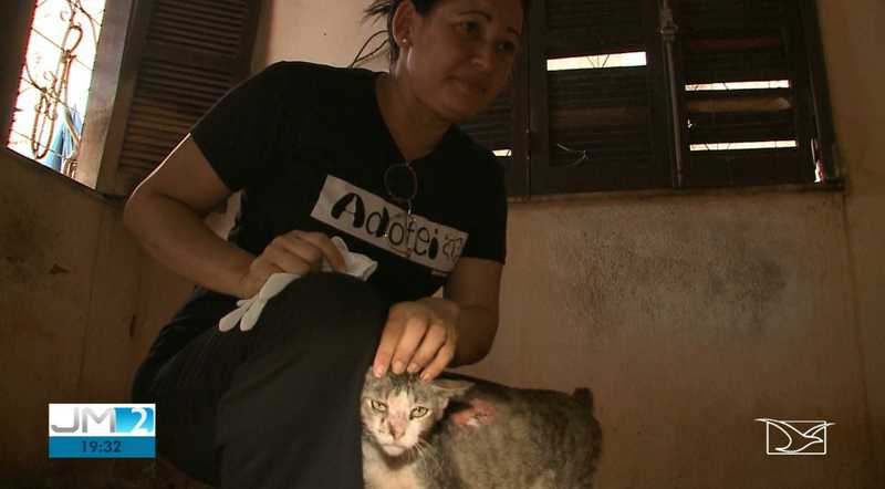 Voluntários se juntaram para resgatar e cuidar dos gatos feridos. Agora, eles buscam um lugar para abrigar os animais — Foto: Reprodução/TV Mirante