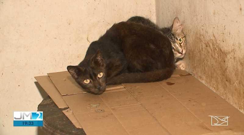 55 gatos abandonados são resgatados por voluntários em São Luís, MA