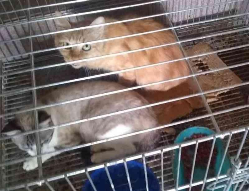 Mulher é notificada por maus-tratos a gatos em Varginha, MG