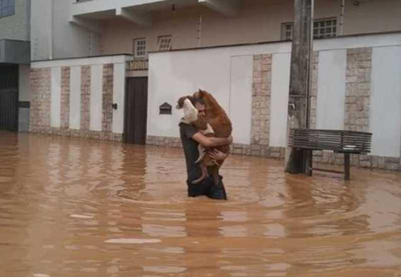 Homem se arrisca em enchente para salvar cachorros