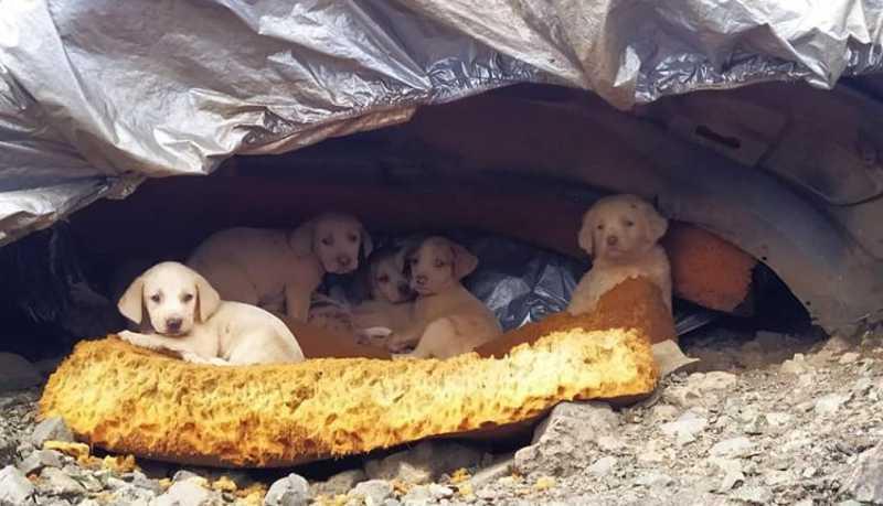 ONG IDDA procura lar para cães encontrados em lixão de Ouro Preto, MG