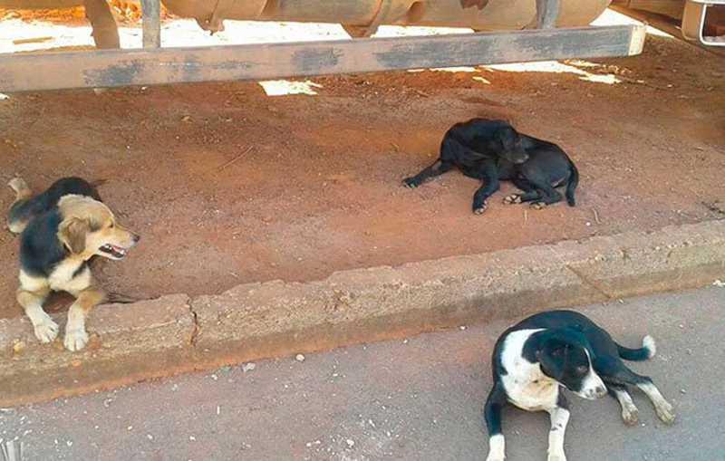 MP e Prefeitura assinam compromisso para identificar e castrar cães e gatos em Patos de Minas, MG