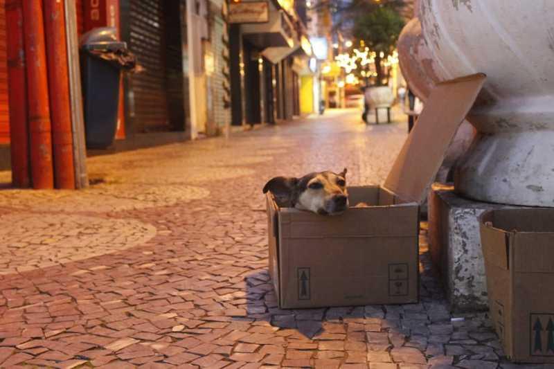 Prefeitura de Viçosa (MG) registra mais de 70 denúncias de maus-tratos a animais em 2019