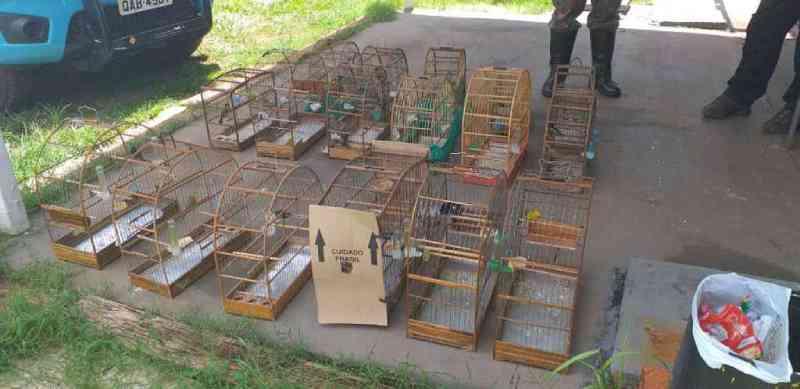 Por manter 16 aves silvestres em cativeiro, homens são multados em R$ 8 mil