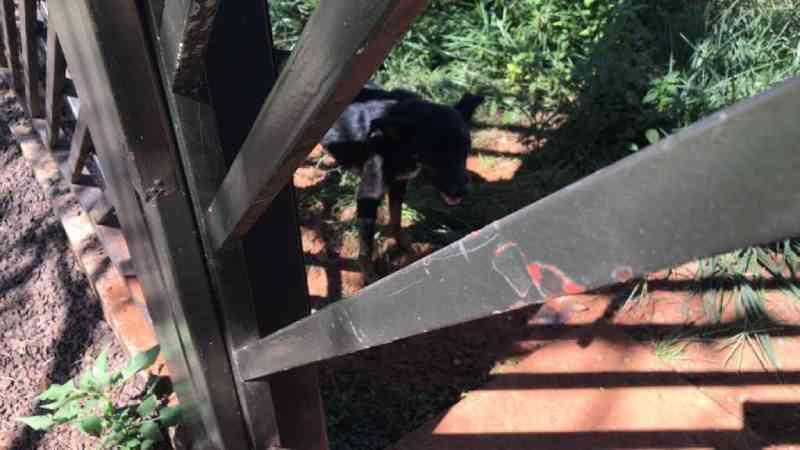 Cadela morre e polícia resgata três cães infestados de carrapatos em Campo Grande, MS