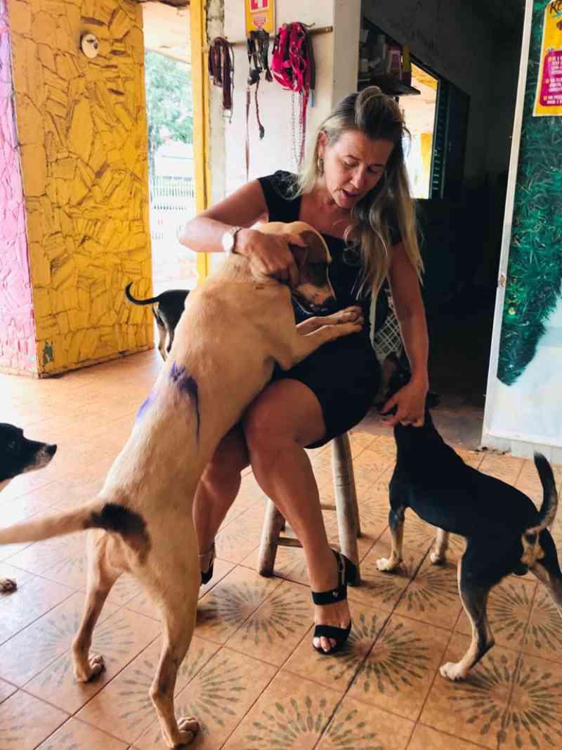 Protetores de animais denunciam maus-tratos contra cães em Dourados, MS