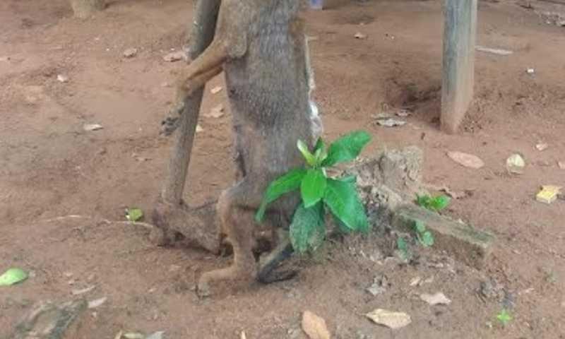 Animal foi morto de forma cruel neste domingo. Foto: Divulgação/PMA