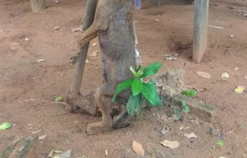 Aposentado mata cão com machadadas e enforcamento em Anastácio, MS