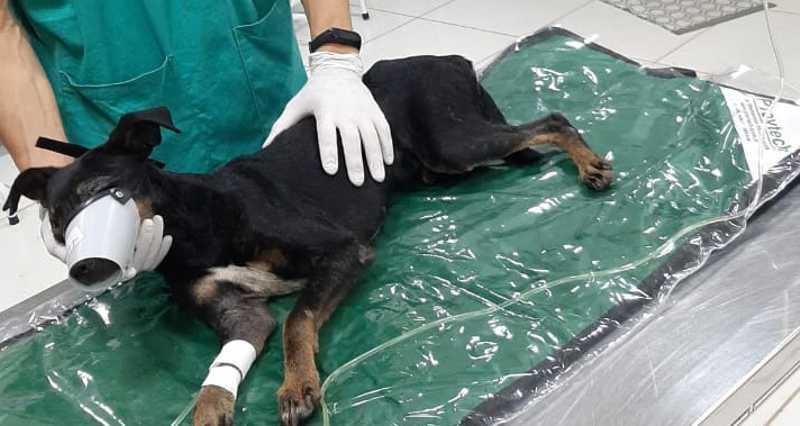 Após resgate em córrego, cachorro é tratado em clínica, em Campo Grande, MS