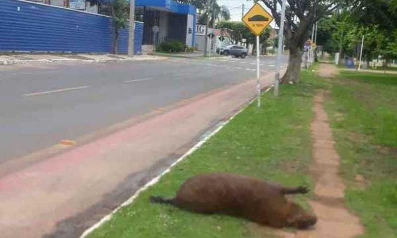 Uma mulher que passava pelo local fotografou o animal
