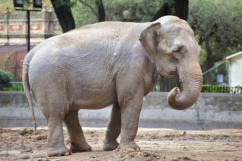 Santuário de Chapada dos Guimarães (MT) recebe Mara, a elefanta maltratada da Argentina